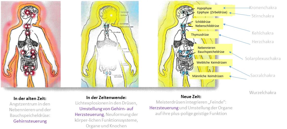 Drüsen-Hormonsystem-Halsweh-grippale Infekte – Kristallkörper